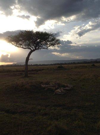 Sentinel Mara Camp: Evening View