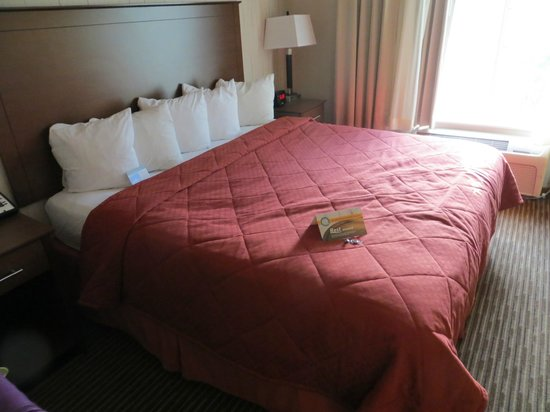 Quality Inn & Suites University Fort Collins: Bed