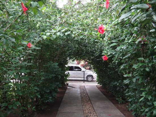 Tropix Hotel: Beautiful archway of hibiscus flowers at the entrance of Hotel Tropix