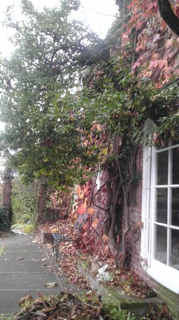 Morgan Samuels Inn: All covered in vines