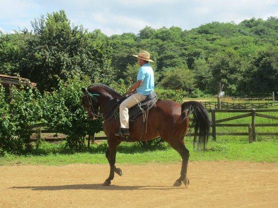 Rancho Santana : The horses are beautiful!