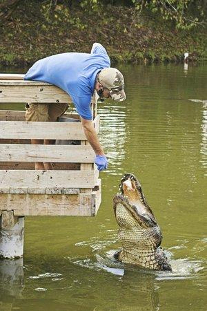 Gatorama: Ben feeding one of the big alligators