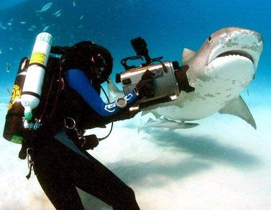 Freedom Divers Phuket: UW Photo Workshop