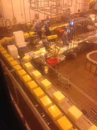 Tillamook Cheese Factory : cheese on the packaging line