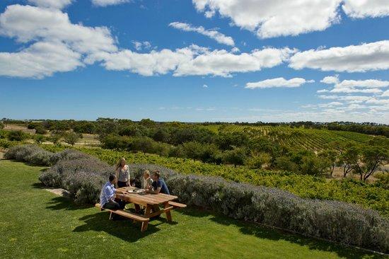 Cape Jaffa Wines: cellar door view