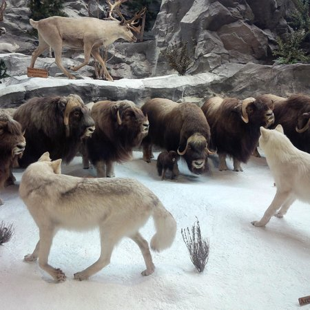 Cabela's: Wolves!