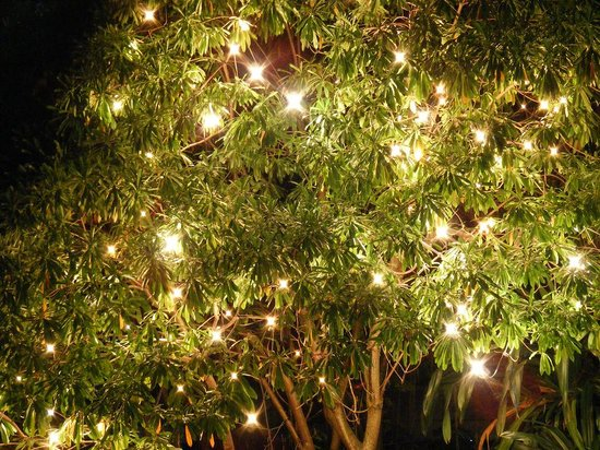 Trees lit up near outdoor restaurant picture of cinnamon grand cinnamon grand colombo trees lit up near outdoor restaurant aloadofball Images