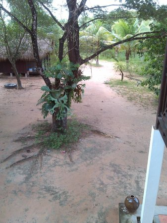 Channa's Angkor Homestay: the view from the balcony outside of the larger room