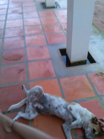 Channa's Angkor Homestay : a little pre-breakfast play time