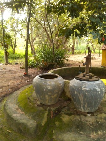 Channa's Angkor Homestay : they have their own well !