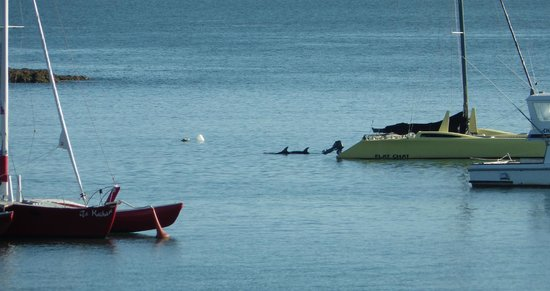 Beached As Paihia: Dolphins from room