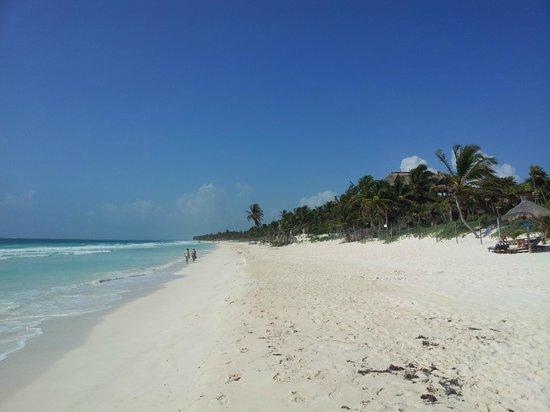 Dos Ceibas Eco Retreat : the beach