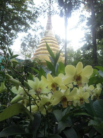 Wat Phra Kaeo (Temple of the Emerald Buddha): Orchid Framed Chedi