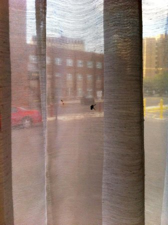 Rodeway Inn Downtown near Riverwalk: dead fly on curtains