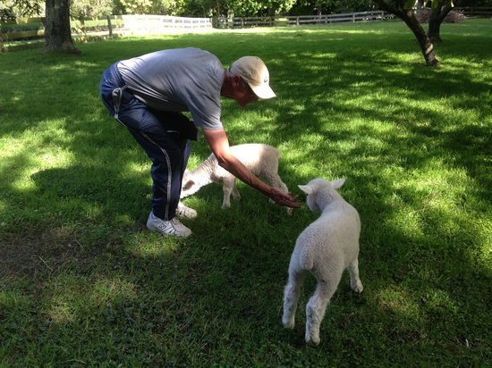 Dylans Country Cottages: Jan with his lamb