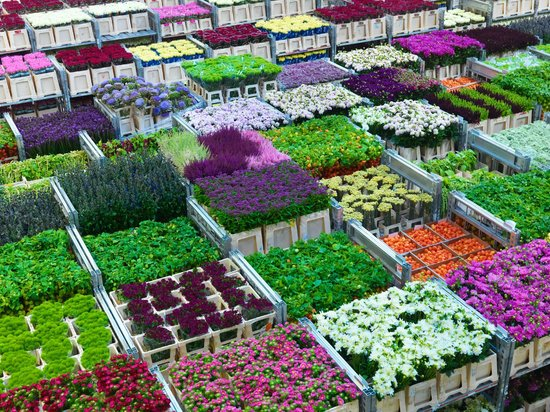‪Royal FloraHolland‬