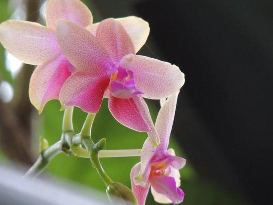 Thapasya Heritage: Orchid at Thapasya