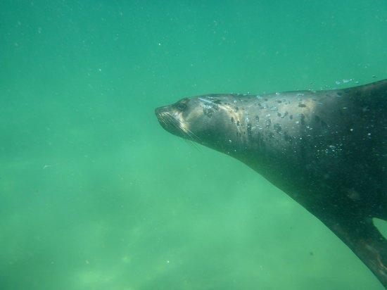 Offshore Adventures : Seal #1