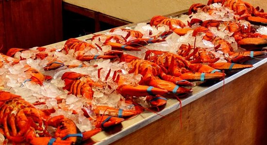 Alma Lobster Shop: The lobsters in the shop