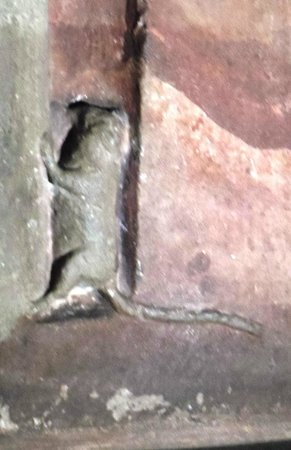 Dom St. Petri: the famous MOUSE in the Cathedral