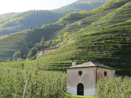 COLTIVAZIONI A TERRAZZE - Picture of Bianzone, Province of Sondrio ...
