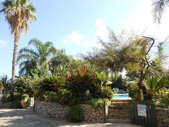Hotel  La Bussola: Giardino Hotel