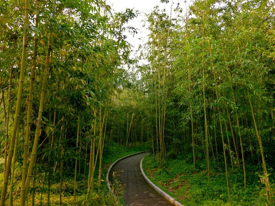 Shangri-La Hotel Beijing: Purple Bamboo Park- 10 min walk from hotel