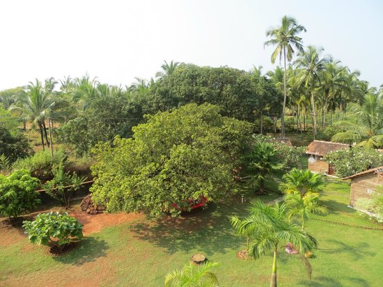 Avalon Inn : View - Cashew tree
