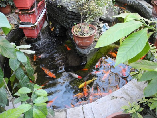Red Lantern House: Fish pond in the courtyard