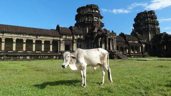Angkor Tour Guide Day Tours : Otra visitante de Angkor Wat