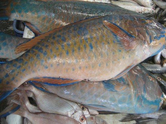 Best food in dubai travel guide on tripadvisor for Fishing in dubai