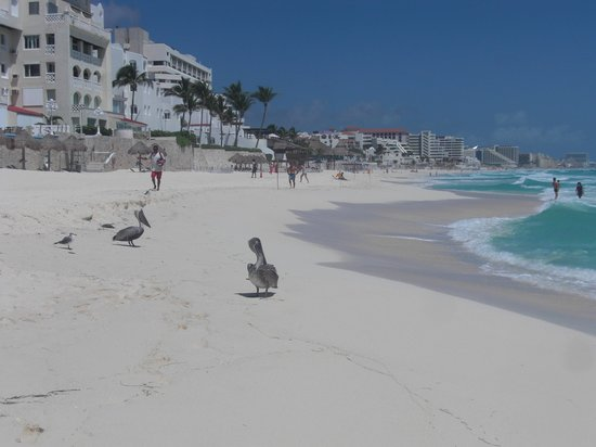 GR Caribe by Solaris : Pelican on the beach.