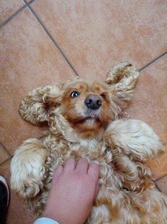 B&B Zia Lina: Der Hund von Zia Lina - Musste einfach gezeigt werden! :)