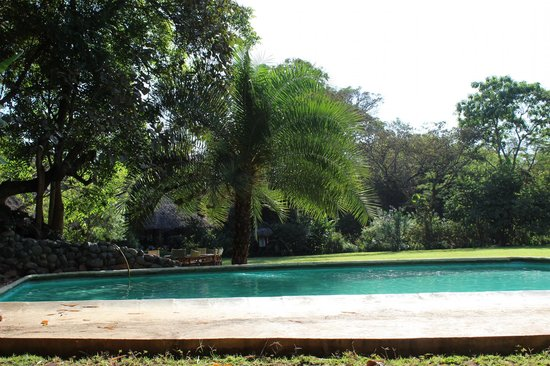 Moivaro Lodge : Piscine et jardin