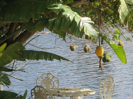 Admiralty Bed & Breakfast : Bird's nests