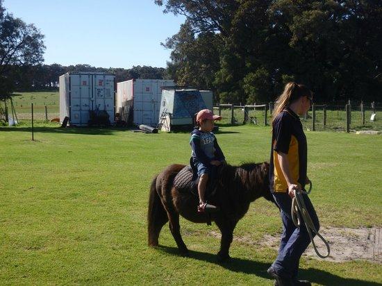 Sunflowers Animal Farm and Farmstay: Pony ride