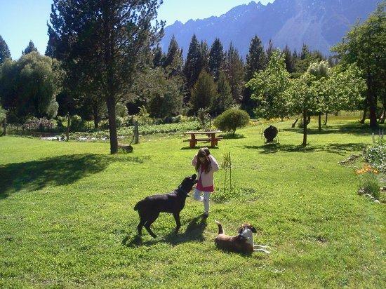 Cabañas El Refugio de Puelo : verde y mas verde con unos perros divinos