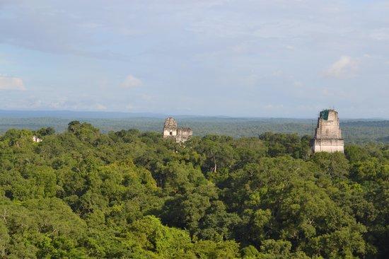 วิหารที่ 4: Jungle Canopy View Temple IV