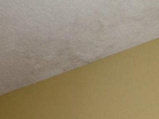 Stay Express Inn & Suites : Mold on ceiling
