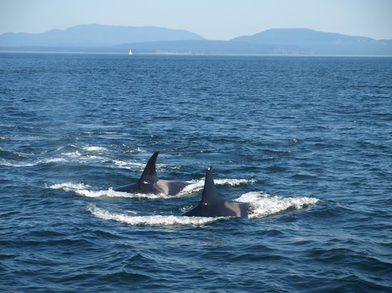 Orcas Island Eclipse Charters: Up close and personal