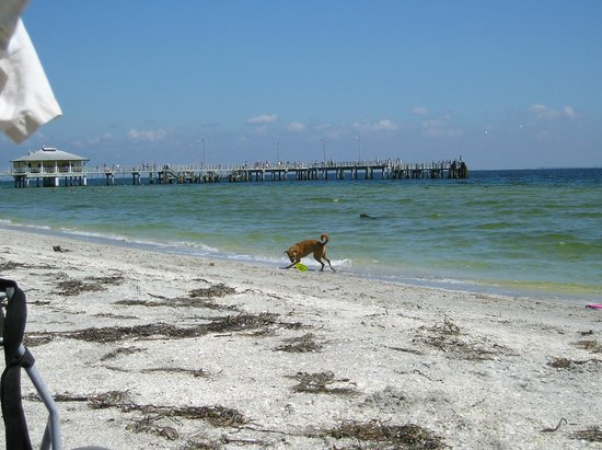 Island Paradise Cottages of Madeira Beach : Ft. Desoto close by for the pups