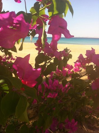 Premier Romance Boutique Hotel and Spa: Lovely beach!