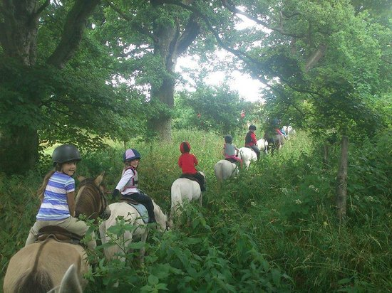 Bank House Equestrian - Private Rides: hacking at bank house equestrian