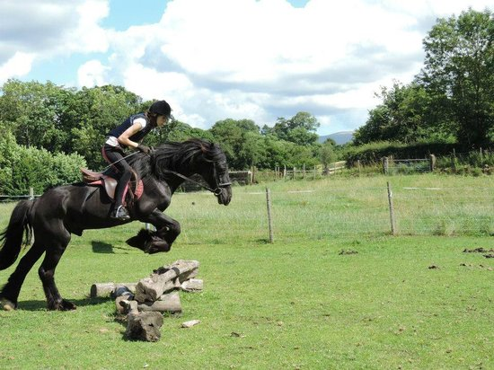 Bank House Equestrian - Private Rides: cross country at bank house equestrian