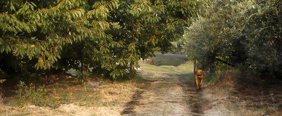 Case Perrotta: Spazieren auf der Kirschplantage mit der Hündin Kowalski