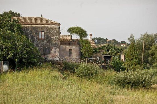 Case Perrotta: Seitenansicht vom Olivenhain aus