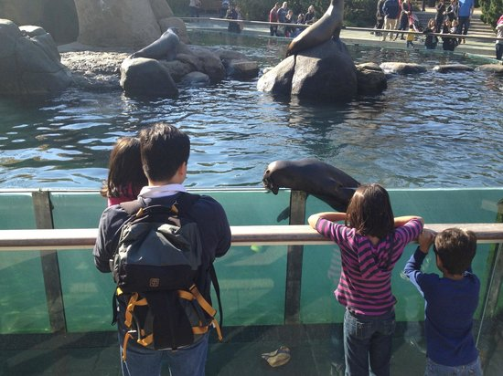 Central Park Zoo: Sea lion show