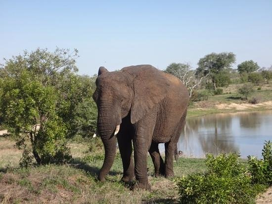 Idube Private Game Reserve Lodge: ellie up, close and personal