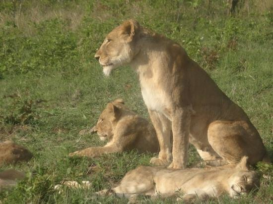 Idube Private Game Reserve Lodge: Lioness and her cub