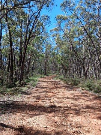 Escapegoat Adventures: Typical trail